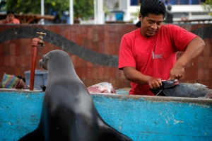 プエルトアヨラ名物の魚市場