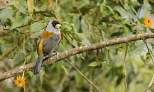 400種類の野鳥が集まるミンド