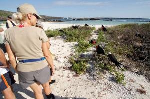 グンカンドリや他の鳥達との距離が最も近く見られるサイト