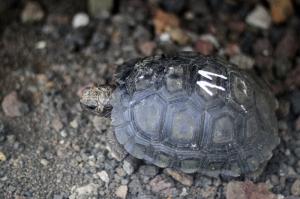 繁殖に成功したたくさんの子ゾウガメが見られます。