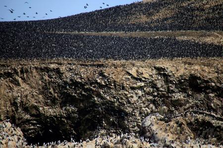 黒い点は全て鳥です。