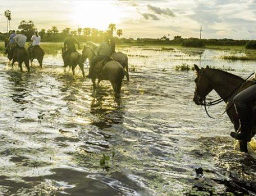 世界最大の湿地パンタナールの大自然を楽しむ4日間