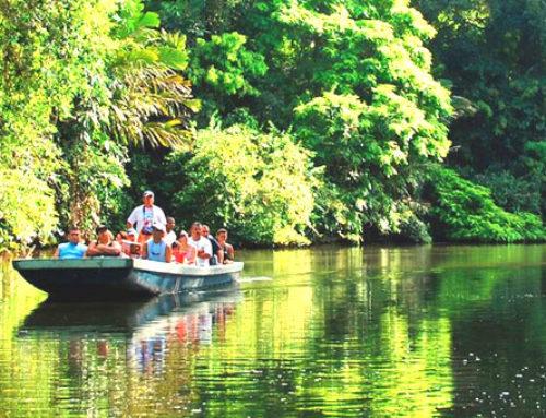コスタリカの美しき大自然を満喫する 現地発着7泊8日の旅
